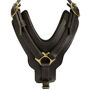 Y-shaped Cane Corso harness