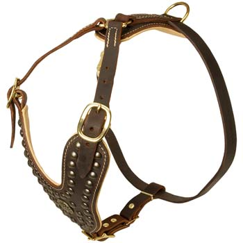Cane Corso leather harness with brooch decoration