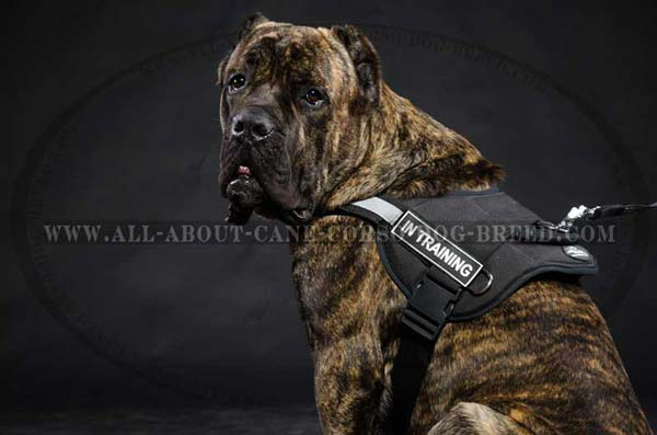 Reflective Nylon Canine Harness for Cane Corso