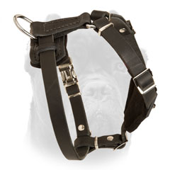 Leather Cane Corso puppy harness with pyramids