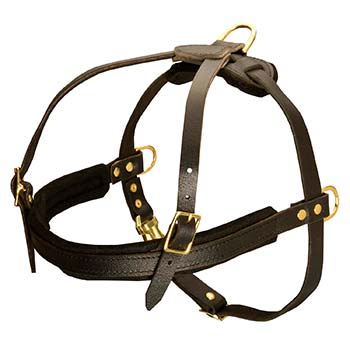 Smooth Leather Harness for Cane Corso Pulling Activity