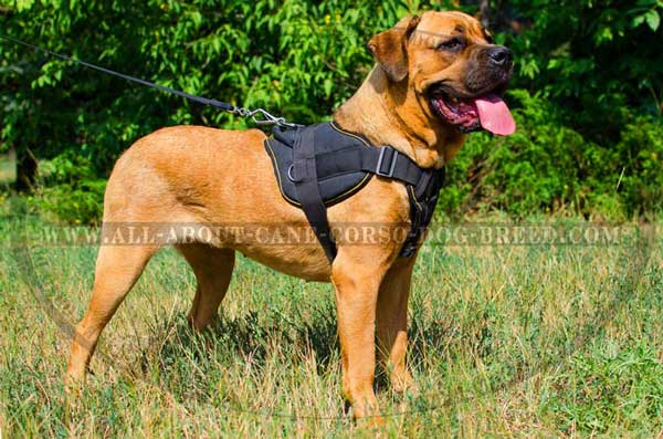 Lightweight Nylon Harness for Cane Corsos