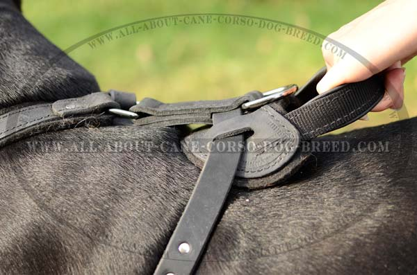 One-Of-A-Kind Leather Dog Harness For Strong Dogs