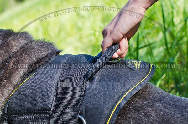 Padded Mastino Napoletano Harness for Tracking Work