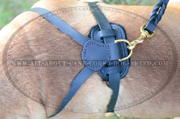 Everyday Leather Bullmastiff Harness