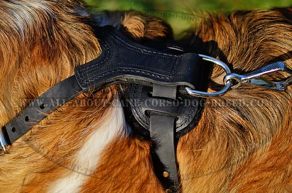 Pleasant Walk Leather Dog Harness With Spikes
