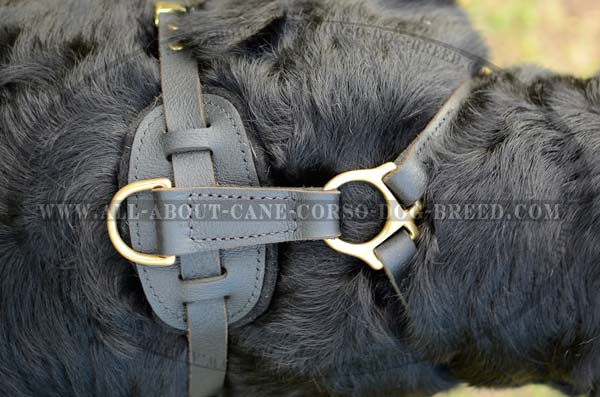 Designer Leather Dog Harness For Big and Strong Dogs