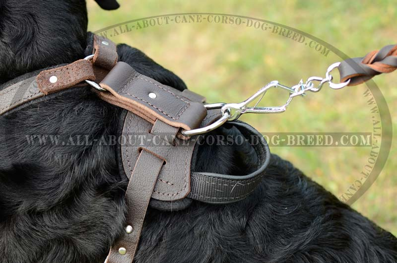 Protectionattackagitation Leather Dog Harness For Rottweilers