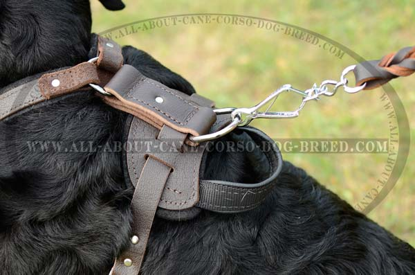 Custom Made Training Leather Dog Harness