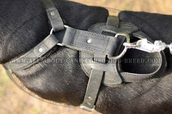 Premium Quality Leather Padded Large Dog Harness