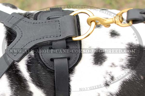 Studded Leather Dog Harness for Molosser dogs