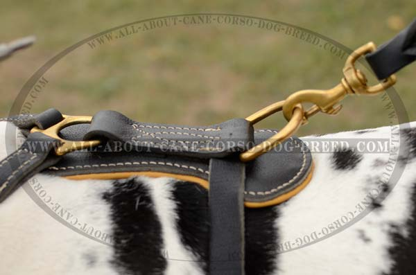 Best Studded Leather Dog Harness
