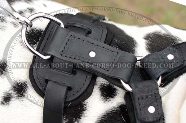 Custom Made Felt Padded Protection Dog Harness