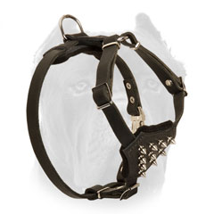 Leather dog harness for Cane Corso puppy