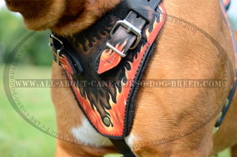 Dogue De Bourdeaux Breed Classic Leather Dog Harness