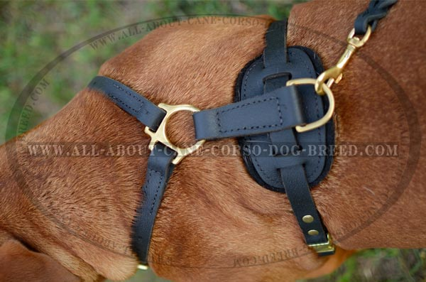 Easy Walking Dog Harness
