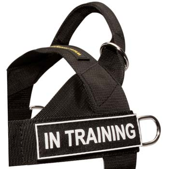 All-weather nylon dog harness for Dogue de Bordeauxs
