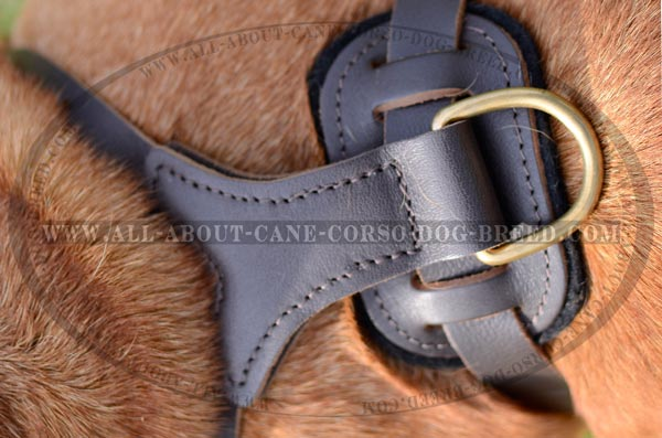 Well-Made Superior Leather Dog Harness