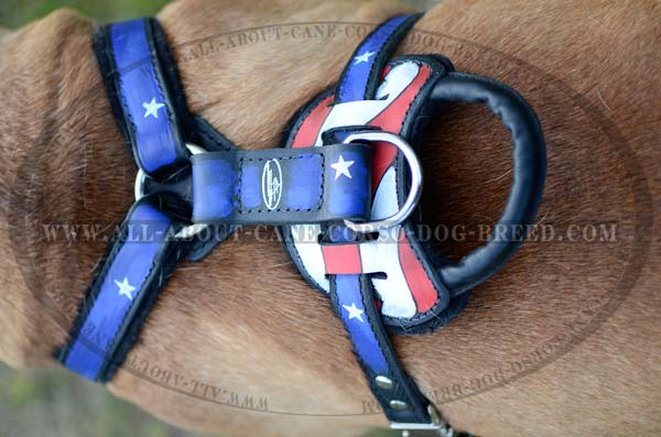 Distinguished Bullmastiff Dog Leather Harness