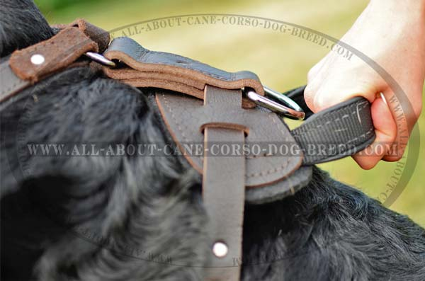 Exclusive Leather Dog Harness With Padded Back Plate