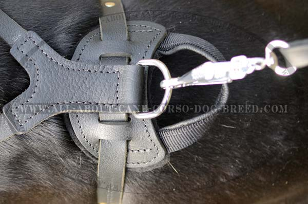 Cane Corso breed leather dog harness adjustable