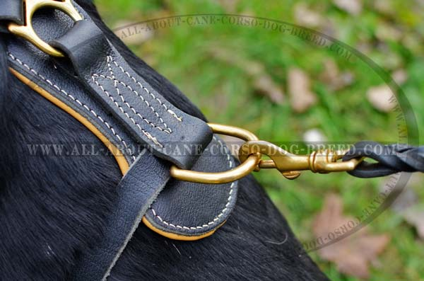 Cane Corso leather dog harness with With Extra Strong Ring for Dog Leash Attachment