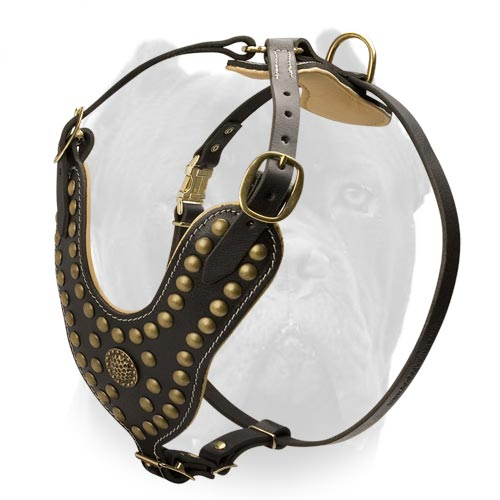 Leather King Harness for American Bulldog Exclusive Design Brass Studded