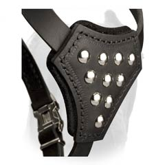 Leather chest plate of puppy harness for Cane Corso