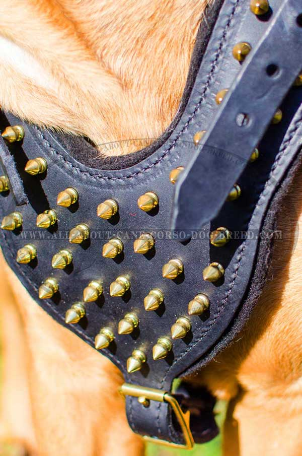 Spikes Leather Chest Plate