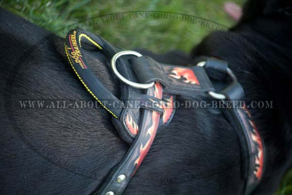 Leather Mastiff Harness with Handle