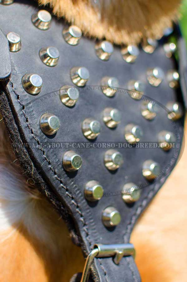 Felt Padded Chest Plate of Leather Harness