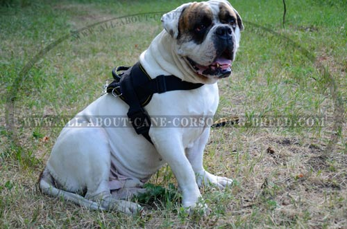 Extra Strong Nylon Canine Harness for American Bulldogs