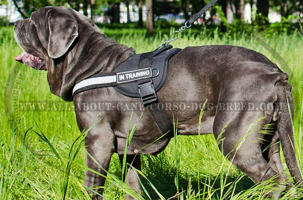 All-Weather Training Nylon Dog Harness for Mastino  Napoletanos