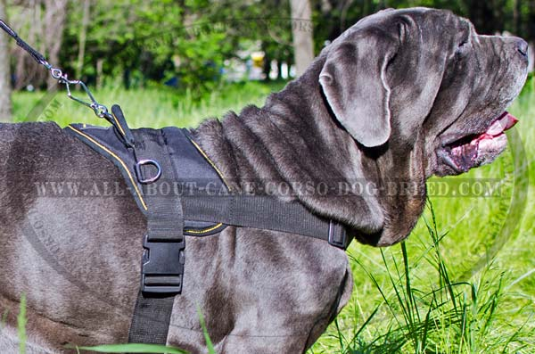 Lightweight Nylon Mastino Napoletano Harness for Pulling  Work