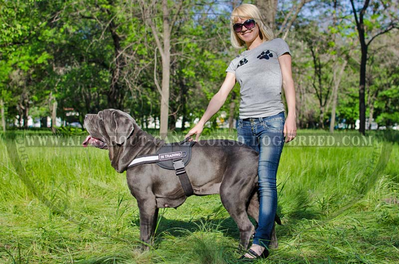 Best Training Nylon Reflective Harness for Mastino ...