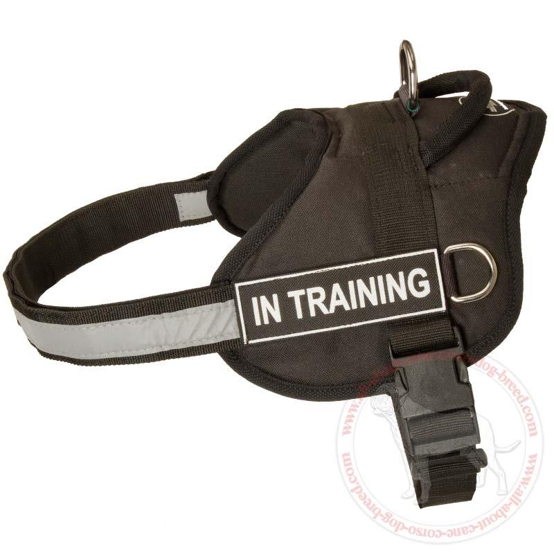 Training Using Dog Harness