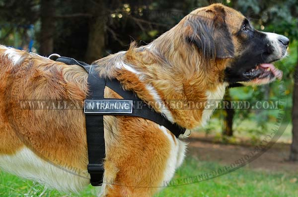Adjustable Moscow Watchdog Harness