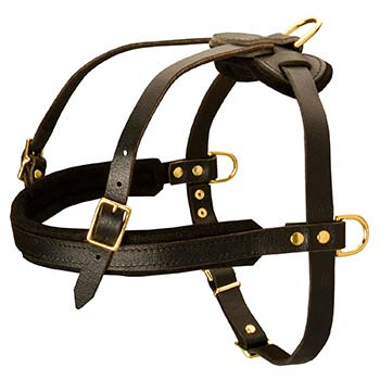Padded front strap harness for Cane Corso