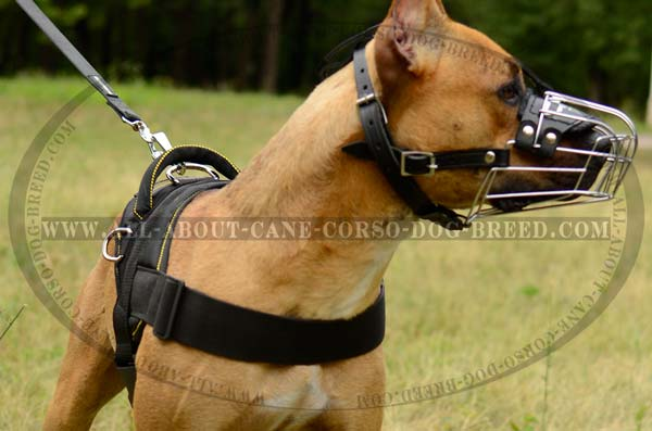 Excellent Handmade Nylon Dog Harness