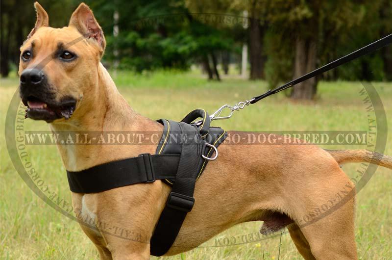 Pitbull dog nylon harness CUSTOM made SAR Padded Finest big buy now light weight pulling walking nylon cane corso dog harness
