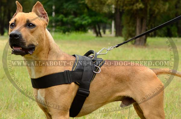 Handworked Nylon Pitbull Harness
