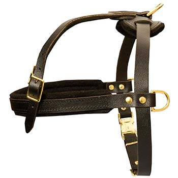 Pulling leather harness for Cane Corso