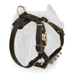Adjustable leather puppy harness for Cane Corso