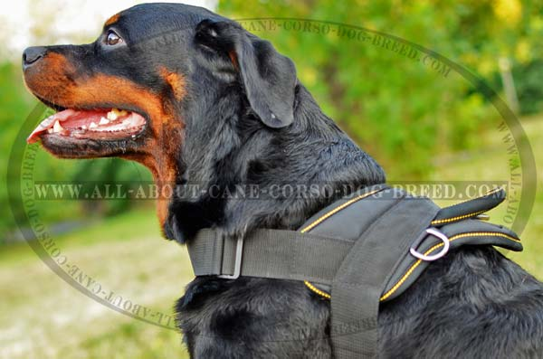 Perfect Nylon Rottweiler Hanress