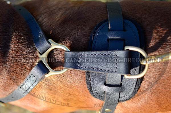 Designer Leather Dog Harness with Point for Leash  Fastening