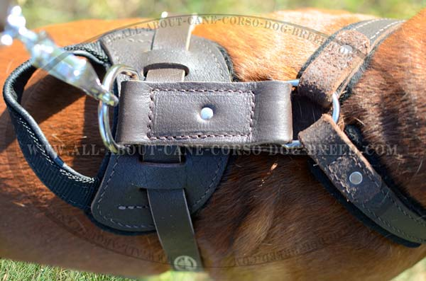 Reliable Leather Dog Harness with Built-In dee Ring