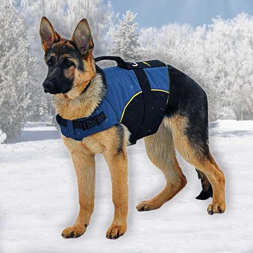 Vest Nylon Harness Handle Dogue De Bourdeaux Breed