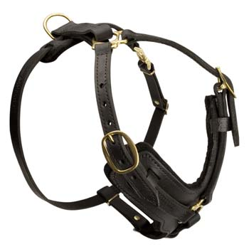 Best fitting training leather harness