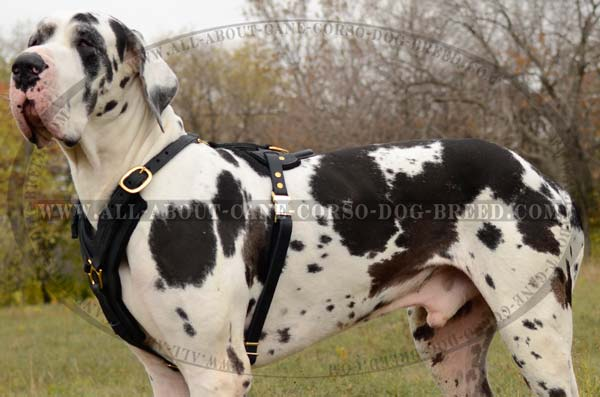 Sleekly Elegant Leather Dog Harness