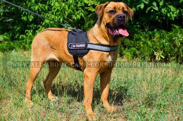 Reflective Nylon Cane Corso Harness with Patches